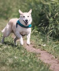 RINVIATO A DATA DA DESTINARSI la Corri Dog 2020 di Bergamo