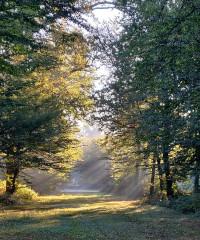 Leggere il Giardino, visita straordinaria nel parco di Stupinigi