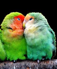 Espositore ornitologica trentina