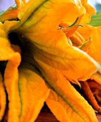 Sagra del Fiore di Zucca fritto