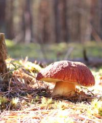 Sagra del fungo e dei prodotti tipici a Pianello