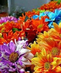 Floreka 2021: fiori, arte e mestieri