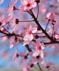 Flor primavera: Torino diventa un grande giardino