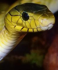 Reptiles Day, la fiera dei rettili a Longarone