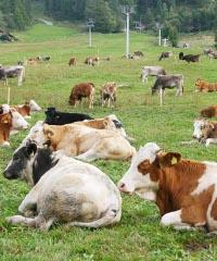 Fea de Vapeleunna, l'Antica fiera del bestiame e dei prodotti tipici valdostani
