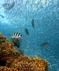 Ocean Film Festival World tour 2021, tappa a Genova