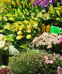 Giardini&Terrazzi 2020: in fiore tutto il centro di Ravenna