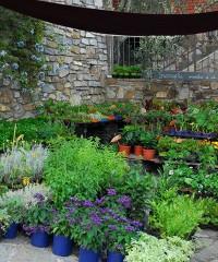 Festa delle erbe aromatiche, officinali e piante antiche