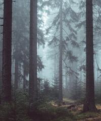 I sussurri dei fantasmi, la misteriosa scala della storia