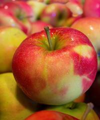 Festa della mela prussiana a Faller
