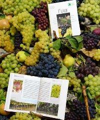 La Festa dell'uva Erbaluce 2019 - Un'antica festa contadina