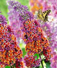 Arte & Natura 2021, fiori e artigianato in Villa Corvini