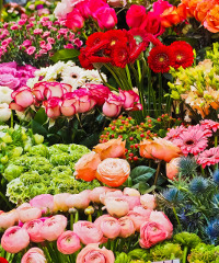 Festa di Primavera a Sedico