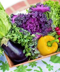 Bioagroarte, il mercatino biologico ad Asti