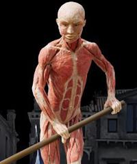 Real Bodies, l'arte umana in mostra a Venezia