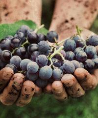 La Festa del vino del Monferrato Unesco