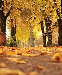 Fall Foliage Festival la festa dei colori autunnali