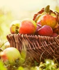 Giornata della mela 2019