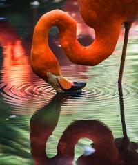 SOSPESO FINO A DATA DA DESTINARSI - Primavera Slow 2020, natura e gusto nel Delta del Po