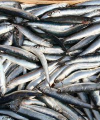 Sagra del pesce