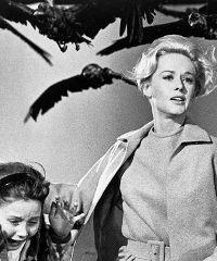 """A Genova la mostra """"Alfred Hitchcock, nei film della Universal Pictures"""""""