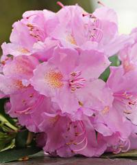 Festa dei Fiori a Primulacco