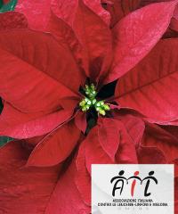Stelle di Natale AIL 2019 a Laconi