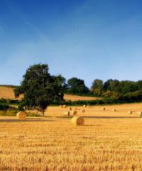 RINVIATA A DATA DA DESTINARSI Agrinatura 2020: il territorio consuma ciò che produce