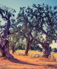 Viaggio virtuale in Puglia in compagnia di Cesare Brandi, guida d'eccezione