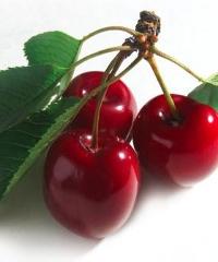 Antica fiera della ciliegia a Dogliani