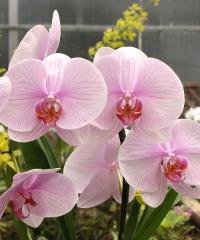 Giardino Jacquard, mostra di orchidee, piante, fiori, bonsai, cultura del verde