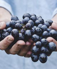 Sagra dell'uva e del vino a Lanuvio