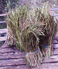 Sagra del Prugnolo e dell'Asparago selvatico