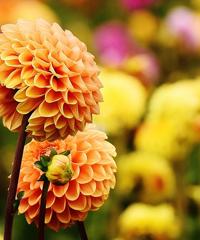 Harborea, festa delle piante e dei giardini d'Oltremare