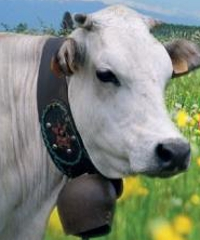 Cavour, carne di razza piemontese