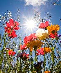 Fiori, Colori e … mostra mercato di florovivaismo
