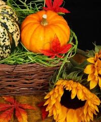 Festa dell'agricoltura - Sapori d'autunno