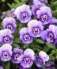Biofioricola, mercatino di piante fiori e prodotti biologici
