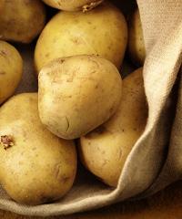 Sagra della patata di San Nicolò Ferrarese