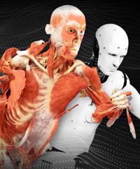 A Milano la mostra più completa di sempre sul corpo umano
