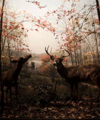 """""""Images Gibellina"""", il primo festival di fotografia e arti visive open air"""