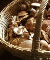 De Gustibus, passeggiate enogastronomiche in Emilia Romagna