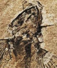"""""""Pesci fossili dai monti friulani"""" in mostra a Tolmezzo"""