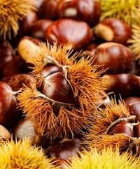 Sagra del marrone e dei Frutti del Sottobosco 2021