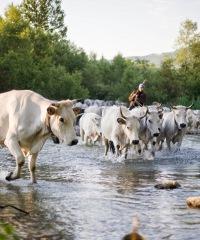 Piante e animali perduti 2019