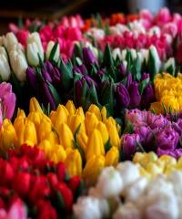 Perugia Flower Show, mostra mercato di piante rare e inconsuete