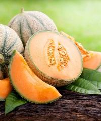 Sagra del Melone