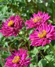 Offagna in fiore