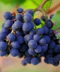 Vino al Vino a Panzano