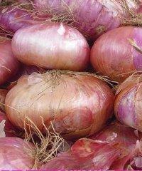 La festa della cipolla a Cannara